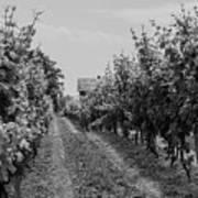 Vineyards Of Old Horizontal Bw Art Print
