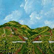 Vineyards Of The Wachau Valley Art Print