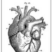 Vintage Anatomical Heart Art Print
