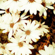 Vintage Daisies Art Print by Denice Breaux