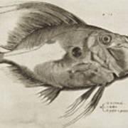 Vintage Fish Print Art Print