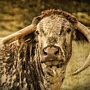 Vintage Longhorn Cattle Art Print