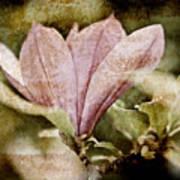 Vintage Magnolia Art Print by Frank Tschakert