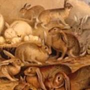 Vintage Rabbit Hutch Art Print