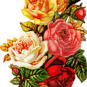 Vintage Rose I Art Print