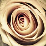 Vintage Rose Art Print by Wim Lanclus
