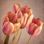 Vintage Tulips Art Print by Wim Lanclus