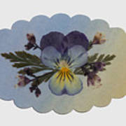 Viola Pressed Flower Arrangement Art Print
