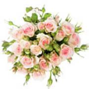 Bouquet Of Garden Roses Art Print