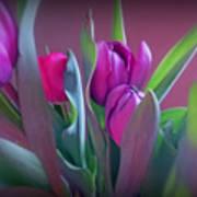 Violet Colored Tulips Art Print