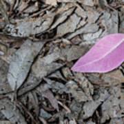 Violet Leaf On The Ground  Art Print