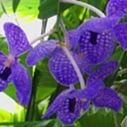 Violet Orchid Trio Art Print