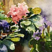 Violets In Sun Art Print