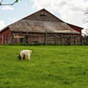 Virginia Farmyard Art Print