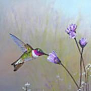 Visiting The Purple Garden Art Print