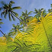 Viti Levu, Coral Coast Art Print