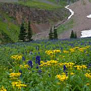 Vivid Colors Of The Colorado Alpine Art Print