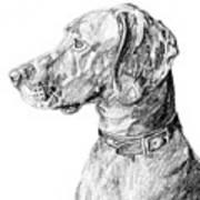 Vizlsa Dog Art Print