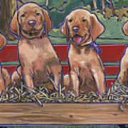 Vizsla Pups Art Print
