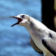 Vocal Sea Gull Art Print