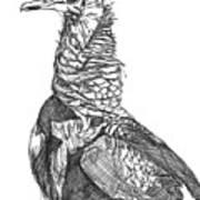 Vulture Sketch Art Print