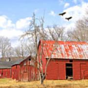 Vultures Over Barn Art Print