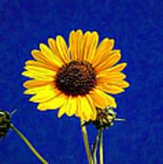 Wabi-sabi Sunflower Art Print