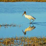 Wadding Wood Stork And Reflection Art Print