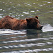 Wading Brown Bear Art Print