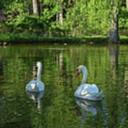 Wagner Vinyard Estate Swans Finger Lakes Lodi Ny Art Print
