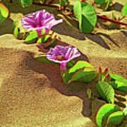 Wailea Beach Morning Glory With Honeybee Art Print