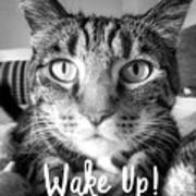 Wake Up It's Your Birthday Cat- Art By Linda Woods Art Print