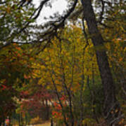 Walden Pond Path Into The Forest 2 Art Print