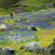 Walk Among The Bluebells Art Print