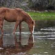 Walk Horse In Salt River Art Print
