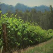 Walk In The Vineyard Art Print