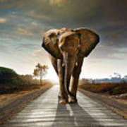 Walking Elephant Art Print