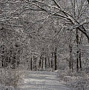 Walking In The Woods Art Print