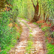 Walkway In Secluded Deciduous Forest Art Print