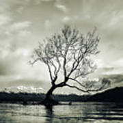 Wanaka Tree - New Zealand  Art Print