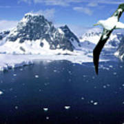 Wandering Albatross Over The Le Maire Channel Art Print