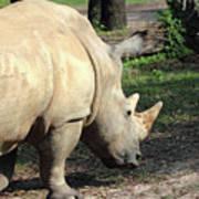 Wandering Rhino Art Print
