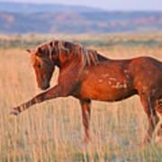 War Horse Art Print by Sandy Sisti
