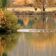 Warm Autumn River Art Print