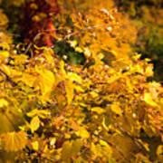 Warm Fall Colors Art Print