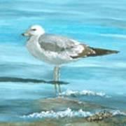 Wary Seagull Art Print