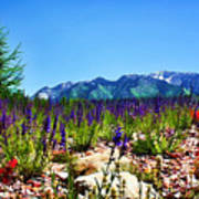 Wasatch Mountains In Spring Print by Tracie Kaska