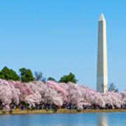 Washington Monument And Cherry Blossoms Art Print