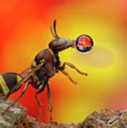 Wasp Blowing Bubble 160605d Art Print