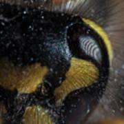 Wasp Eye Art Print